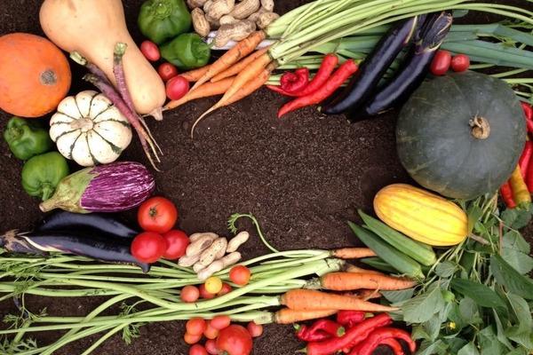 個性ある厳選季節野菜(10品)