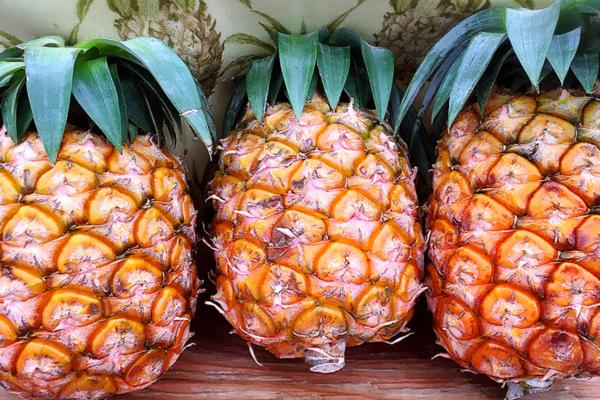 無農薬パイナップル3個セット