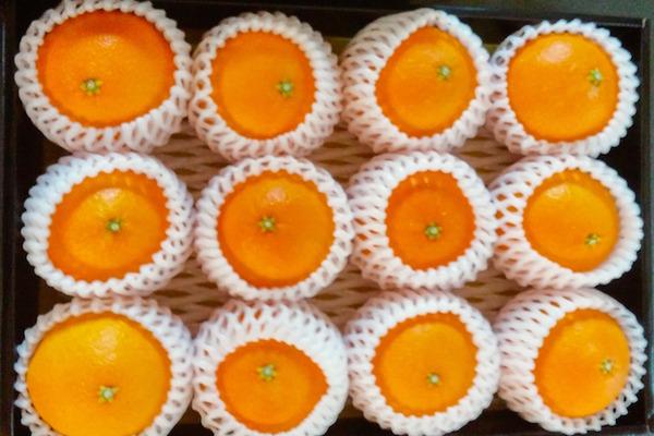 【12月中旬販売予定!】ゼリーのような新食感「愛媛マドンナ」3kg