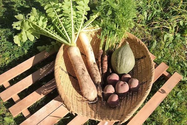 【自然栽培】野菜セット5種類(2〜3人家族用)