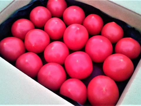 《11月〜販売開始》ブちゃいくトマト*詰め合わせ(2kg)