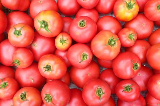 【北アルプス育ち】無農薬*トマト~2kg