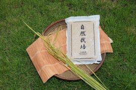※2017年産につき特別価格【名水に育まれた自然栽培米】『元田旭』精米4.5㎏