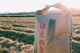 【お中元に!】29年産「はえぬき」玄米10kg
