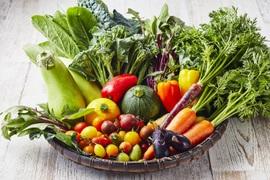 かつのりな農園季節のお野菜セットMサイズ