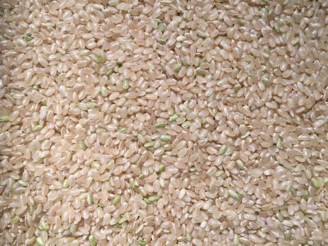 アイガモ米 玄米10㎏ 新米