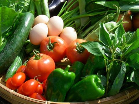 【湘南】卵ソムリエの放し飼い自然卵20個と旬の無農薬野菜5種のセット