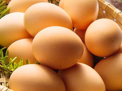 【湘南】卵ソムリエの放し飼い自然卵1パック【10個】